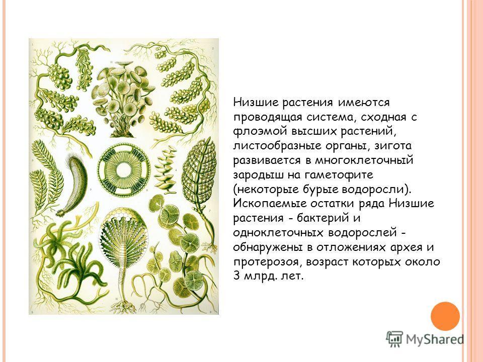 Низшие растения имеются проводящая система, сходная с флоэмой высших растений, листообразные органы, зигота развивается в многоклеточный зародыш на гаметофите (некоторые бурые водоросли). Ископаемые остатки ряда Низшие растения - бактерий и одноклето