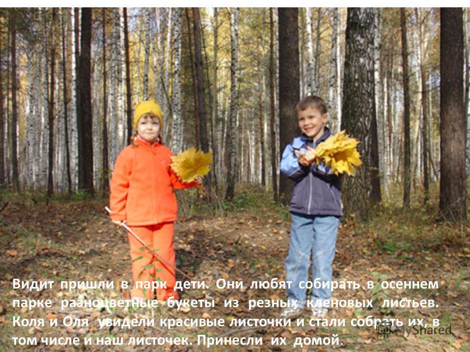 Видит пришли в парк дети. Они любят собирать в осеннем парке разноцветные букеты из резных кленовых листьев. Коля и Оля увидели красивые листочки и стали собрать их, в том числе и наш листочек. Принесли их домой.