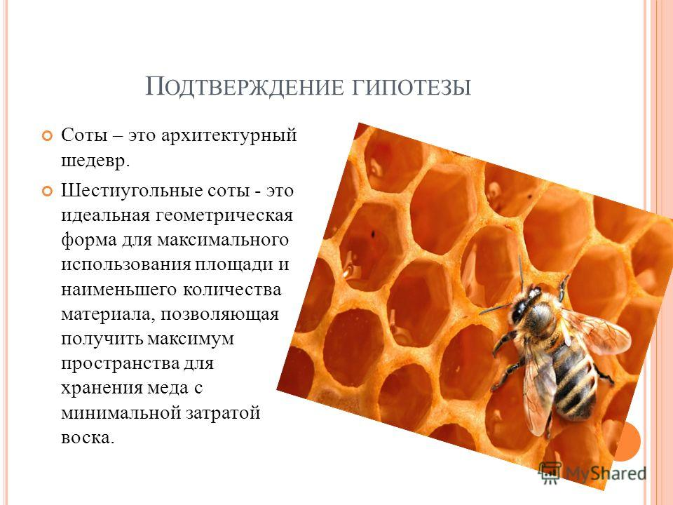 П ОДТВЕРЖДЕНИЕ ГИПОТЕЗЫ Соты – это архитектурный шедевр. Шестиугольные соты - это идеальная геометрическая форма для максимального использования площади и наименьшего количества материала, позволяющая получить максимум пространства для хранения меда
