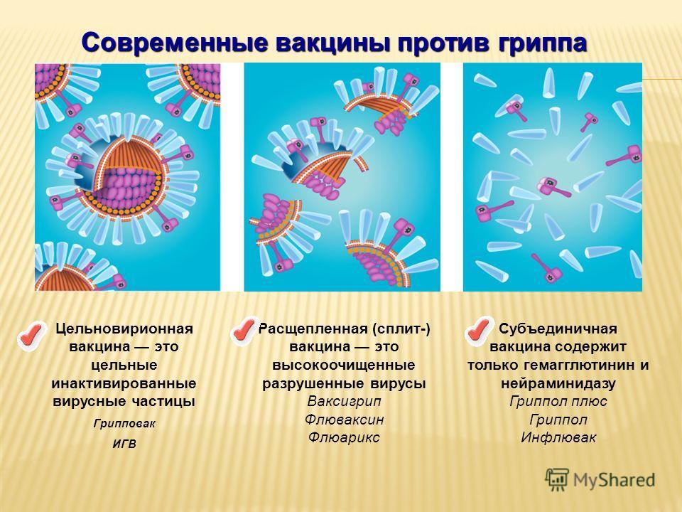 Современные вакцины против гриппа Цельновирионная вакцина это цельные инактивированные вирусные частицы Грипповак ИГВ Расщепленная (сплит-) вакцина это высокоочищенные разрушенные вирусы Ваксигрип Флюваксин Флюарикс Субъединичная вакцина содержит тол