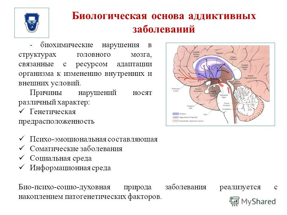 Биологическая основа аддиктивных заболеваний - биохимические нарушения в структурах головного мозга, связанные с ресурсом адаптации организма к изменению внутренних и внешних условий. Причины нарушений носят различный характер: Генетическая предраспо