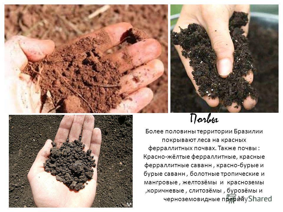 Почвы Более половины территории Бразилии покрывают леса на красных ферраллитных почвах. Также почвы : Красно-жёлтые ферраллитные, красные ферраллитные саванн, красно-бурые и бурые саванн, болотные тропические и мангровые, желтозёмы и красноземы,корич