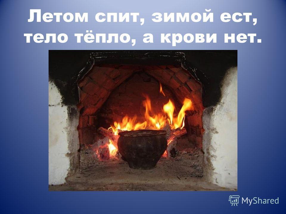 Летом спит, зимой ест, тело тёпло, а крови нет.