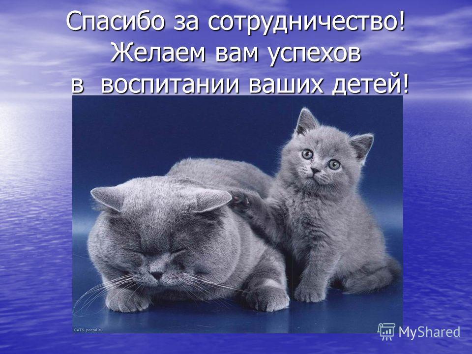 Спасибо за сотрудничество! Желаем вам успехов в воспитании ваших детей!
