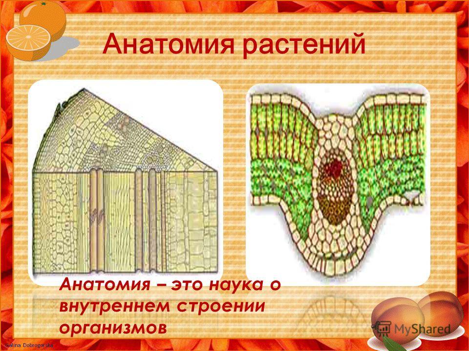 Анатомия растений Анатомия – это наука о внутреннем строении организмов