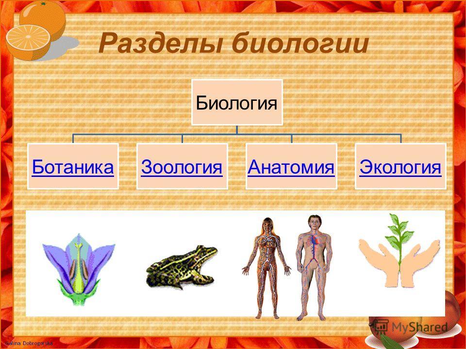 Разделы биологии Биология БотаникаЗоологияАнатомияЭкология