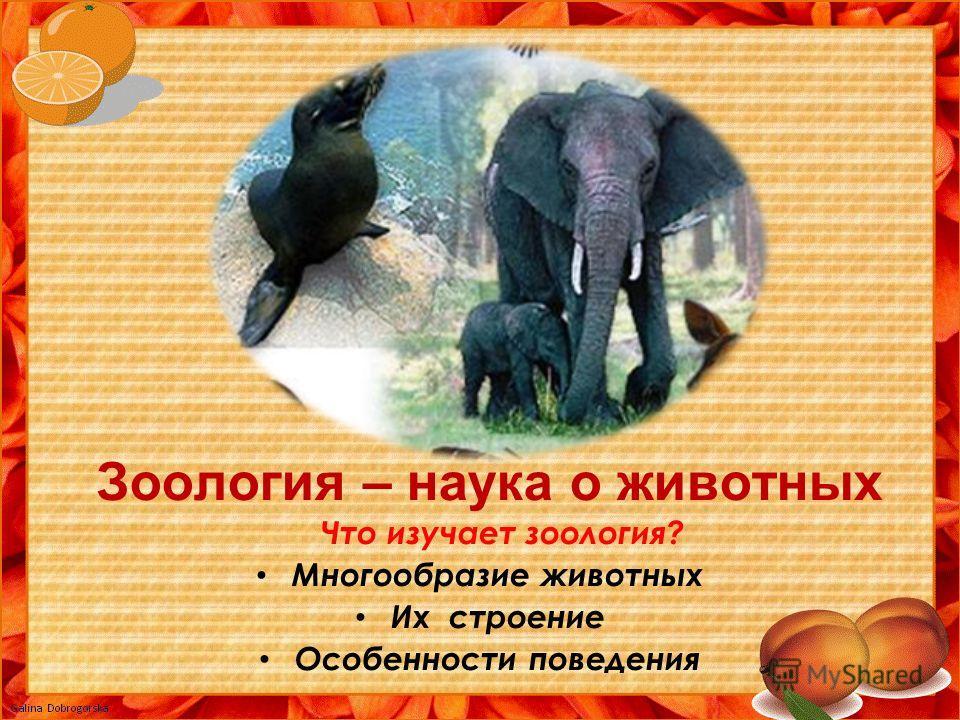 Зоология – наука о животных Что изучает зоология? Многообразие животных Их строение Особенности поведения