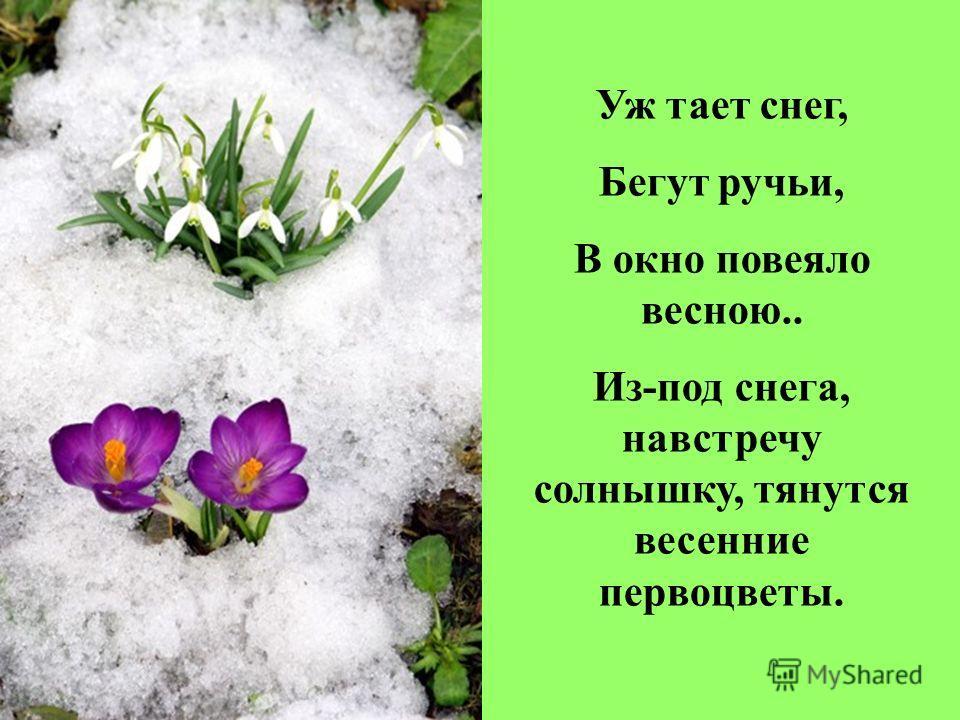Уж тает снег, Бегут ручьи, В окно повеяло весною.. Из-под снега, навстречу солнышку, тянутся весенние первоцветы.