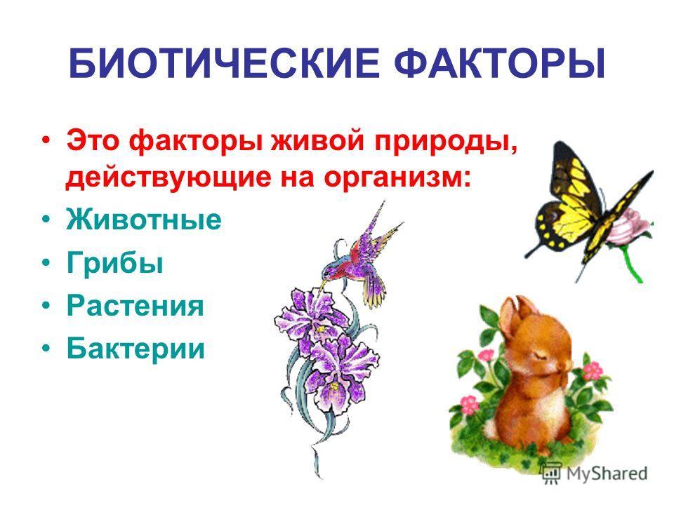 БИОТИЧЕСКИЕ ФАКТОРЫ Это факторы живой природы, действующие на организм: Животные Грибы Растения Бактерии