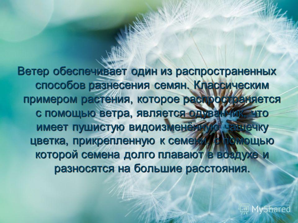 Ветер обеспечивает один из распространенных способов разнесения семян. Классическим примером растения, которое распространяется с помощью ветра, является одуванчик, что имеет пушистую видоизменённую чашечку цветка, прикрепленную к семени, с помощью к