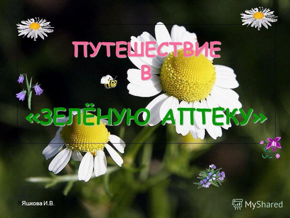 ЯЯшкова И.В.1 ПУТЕШЕСТВИЕ В «ЗЕЛЁНУЮ АПТЕКУ»