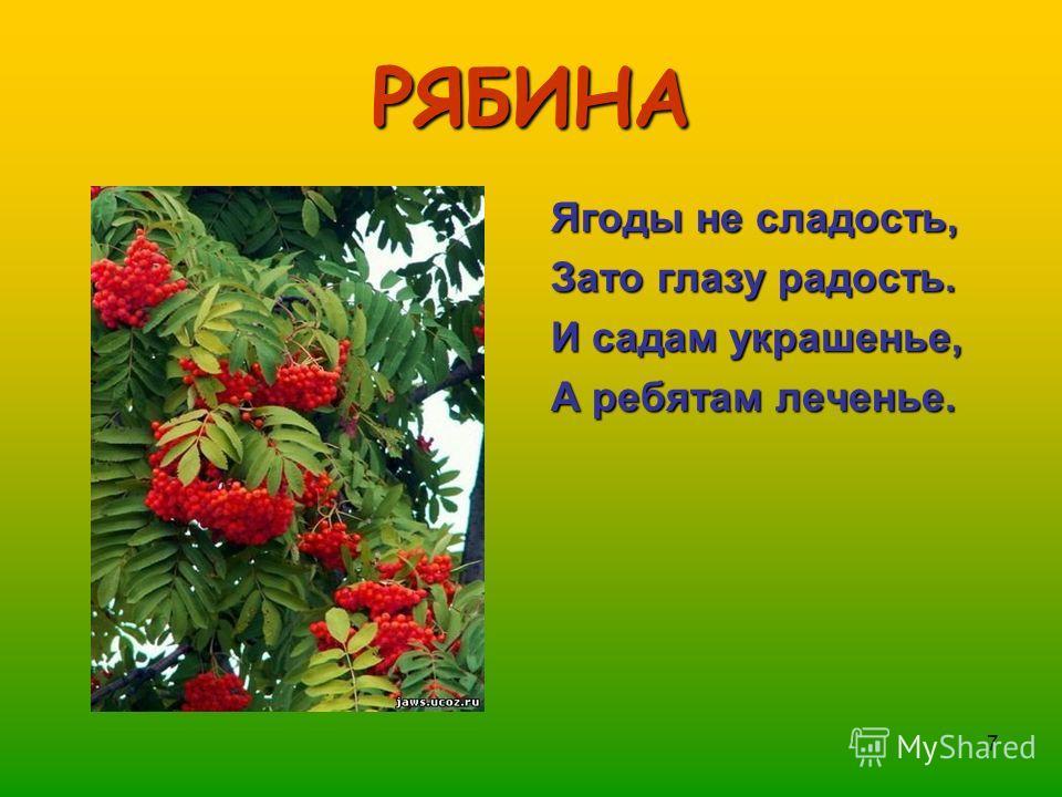 7 РЯБИНА Ягоды не сладость, Зато глазу радость. И садам украшенье, А ребятам леченье.