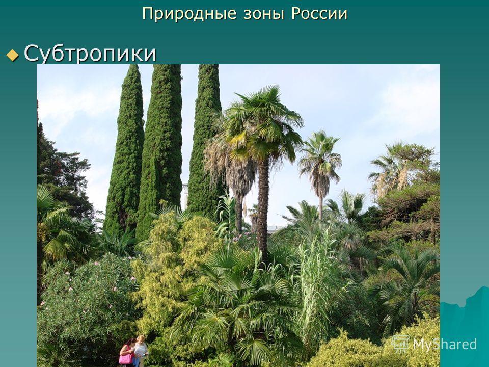 Субтропики Субтропики Природные зоны России