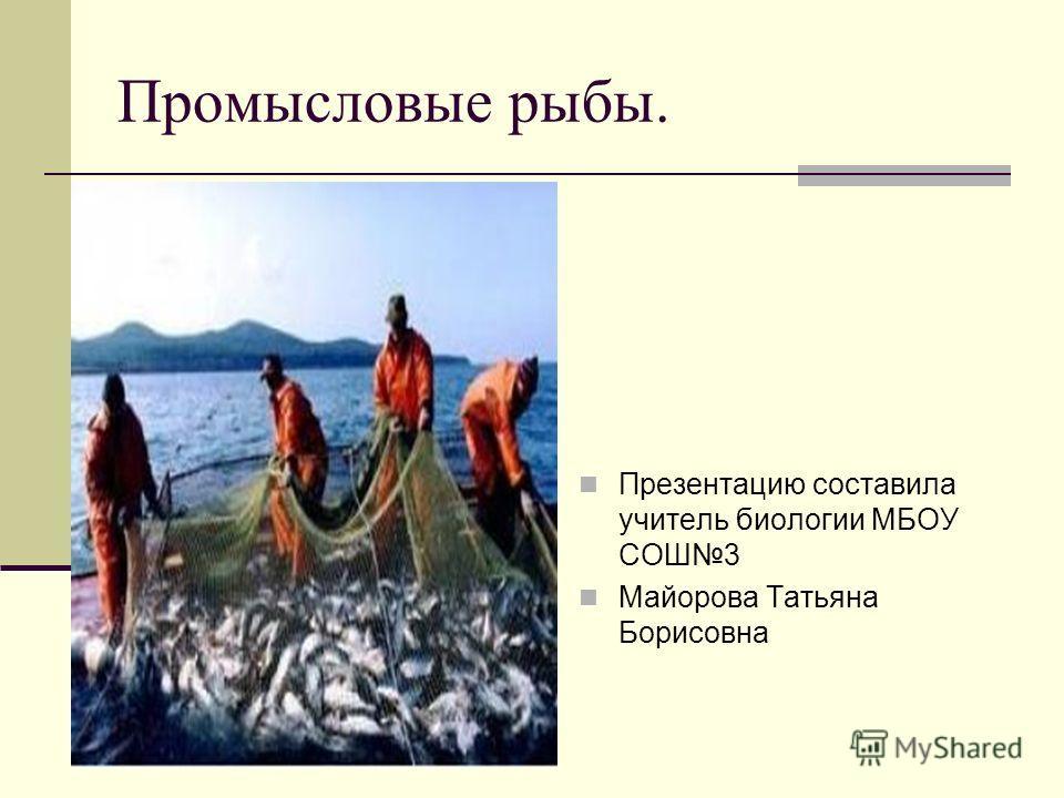 Промысловые рыбы. Презентацию составила учитель биологии МБОУ СОШ3 Майорова Татьяна Борисовна