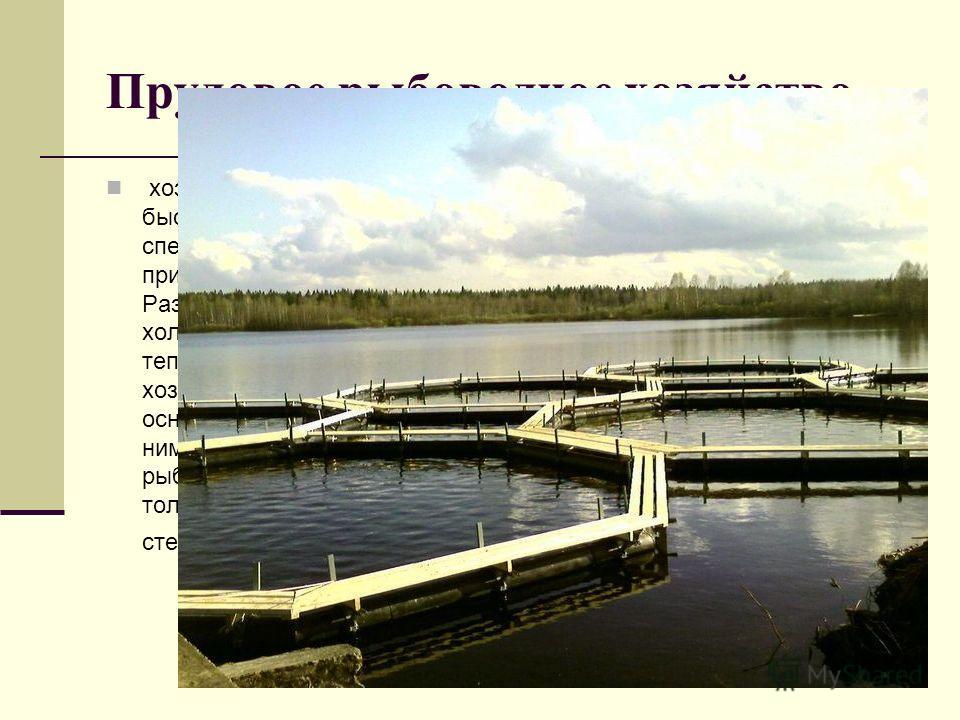 Прудовое рыбоводное хозяйство, хозяйство, разводящее быстро растущие виды рыб в специально построенных или приспособленных прудах. Различают тепловодные и холодноводные П. р. х. В тепловодном прудовом хозяйстве выращивают в основном карпа и совместно