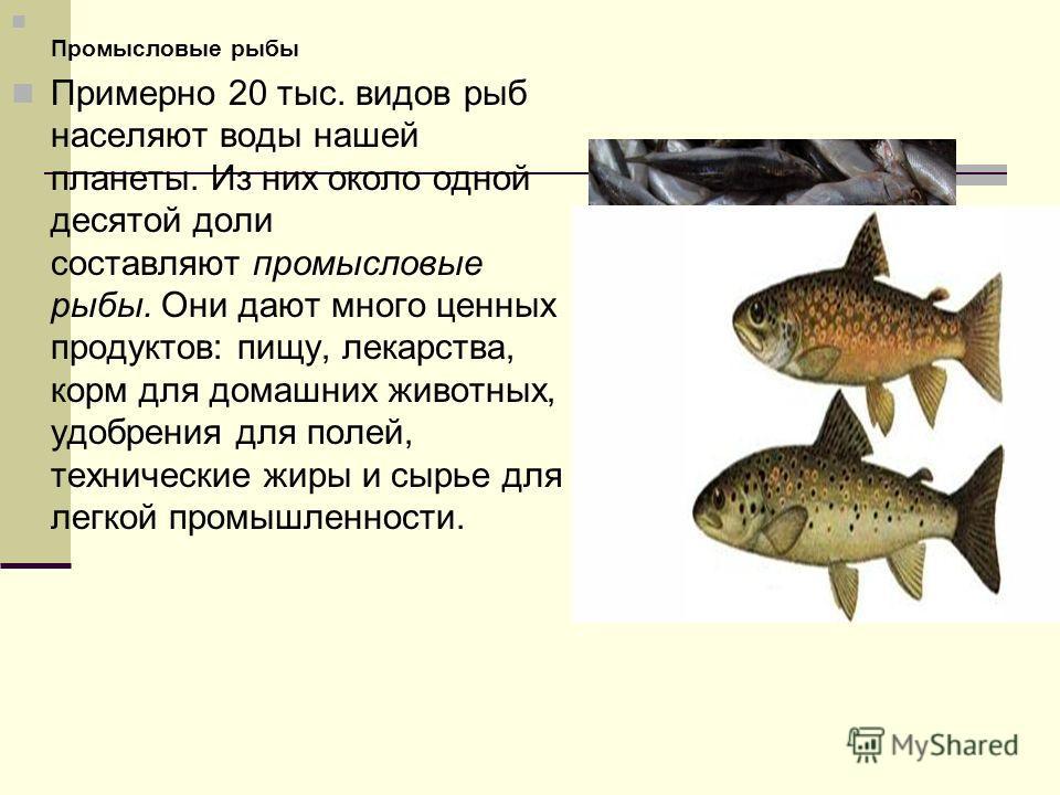 Промысловые рыбы Примерно 20 тыс. видов рыб населяют воды нашей планеты. Из них около одной десятой доли составляют промысловые рыбы. Они дают много ценных продуктов: пищу, лекарства, корм для домашних животных, удобрения для полей, технические жиры