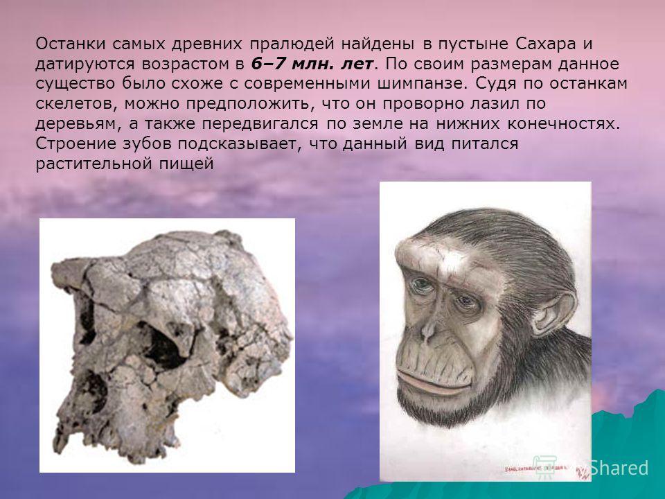 Останки самых древних пралюдей найдены в пустыне Сахара и датируются возрастом в 6–7 млн. лет. По своим размерам данное существо было схоже с современными шимпанзе. Судя по останкам скелетов, можно предположить, что он проворно лазил по деревьям, а т