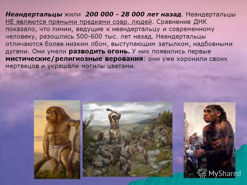 Неандертальцы жили 200 000 - 28 000 лет назад. Неандертальцы НЕ являются прямыми предками совр. людей. Сравнение ДНК показало, что линии, ведущие к неандертальцу и современному человеку, разошлись 500-600 тыс. лет назад. Неандертальцы отличаются боле