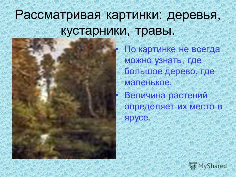 Рассматривая картинки: деревья, кустарники, травы. По картинке не всегда можно узнать, где большое дерево, где маленькое. Величина растений определяет их место в ярусе.