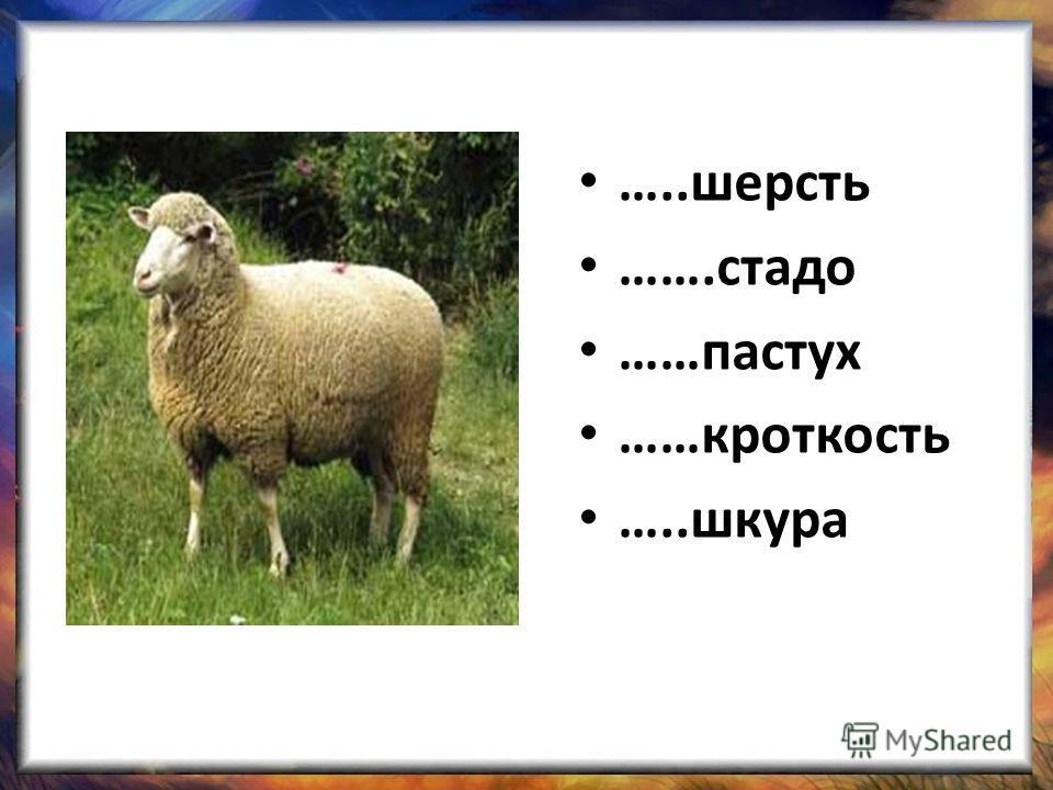 …..шерсть …….стадо ……пастух ……кроткость …..шкура