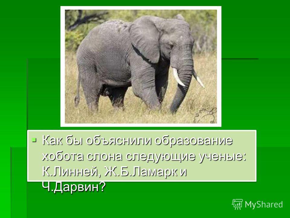 Как бы объяснили образование хобота слона следующие ученые: К.Линней, Ж.Б.Ламарк и Ч.Дарвин? Как бы объяснили образование хобота слона следующие ученые: К.Линней, Ж.Б.Ламарк и Ч.Дарвин?