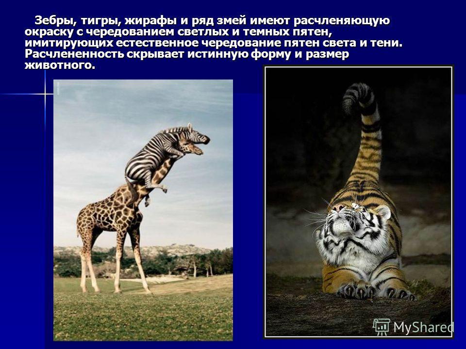 Зебры, тигры, жирафы и ряд змей имеют расчленяющую окраску с чередованием светлых и темных пятен, имитирующих естественное чередование пятен света и тени. Расчлененность скрывает истинную форму и размер животного. Зебры, тигры, жирафы и ряд змей имею