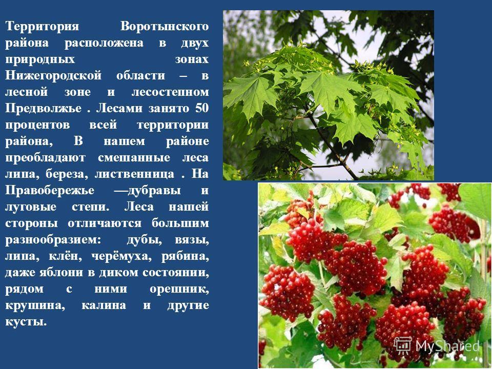 Территория Воротынского района расположена в двух природных зонах Нижегородской области – в лесной зоне и лесостепном Предволжье. Лесами занято 50 процентов всей территории района, В нашем районе преобладают смешанные леса липа, береза, лиственница.