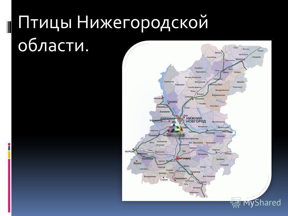 Птицы Нижегородской области.