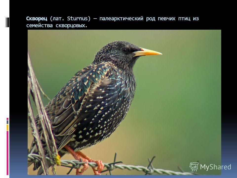 Скворец (лат. Sturnus) палеарктический род певчих птиц из семейства скворцовых.