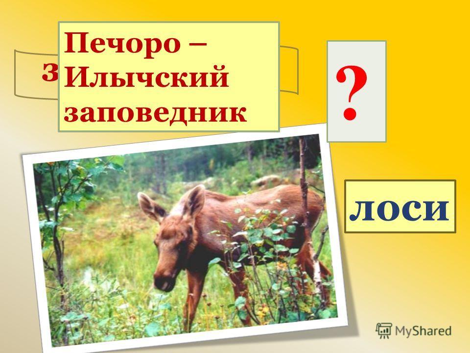 ? лоси заповедник Печоро – Илычский заповедник