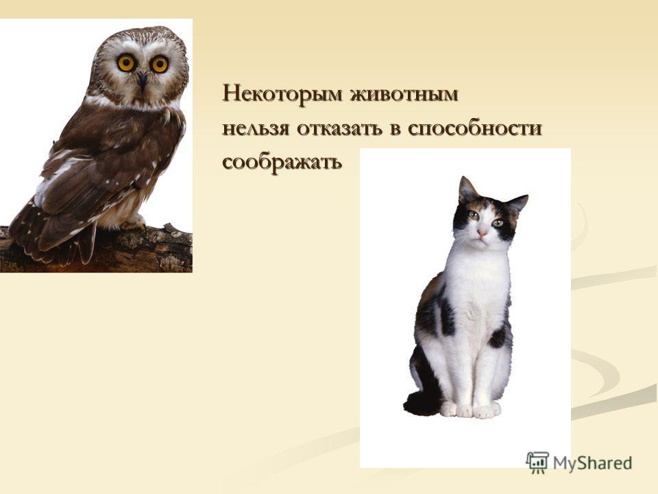 Посмотреть в книгах и в компьютере Оказывается, у животных и у людей, схожие инстинкты поведения. Они умеют требовать или подчиняться, но оценивать свои действия животные не умеют. Оказывается, у животных и у людей, схожие инстинкты поведения. Они ум