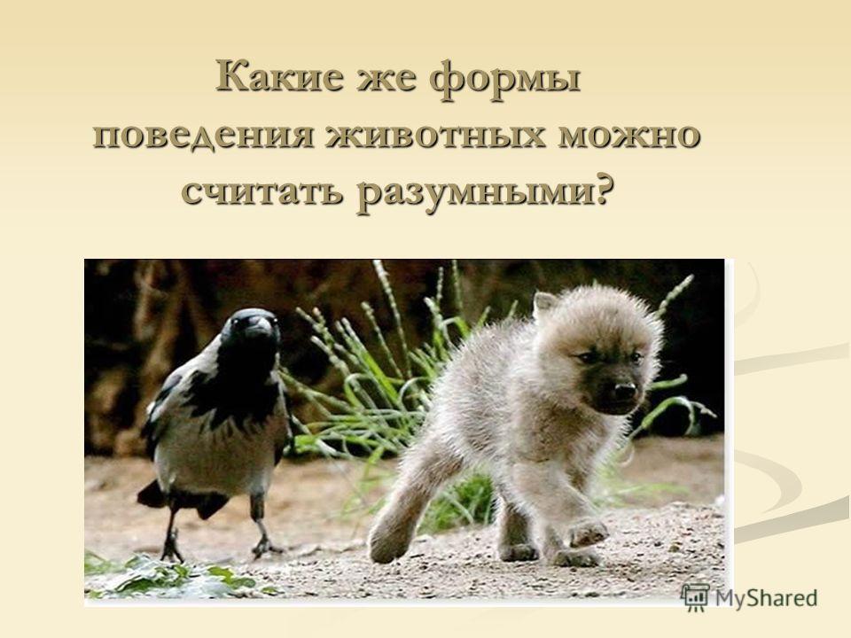 Как ни разумно выглядят действия птиц, ни одна из них ничего не придумывает, все они действуют одинаково, повинуясь инстинкту, согласно готовой программе, приспосабливаясь к окружающей среде.