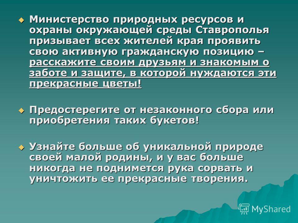 Министерство природных ресурсов и охраны окружающей среды Ставрополья призывает всех жителей края проявить свою активную гражданскую позицию – расскажите своим друзьям и знакомым о заботе и защите, в которой нуждаются эти прекрасные цветы! Министерст