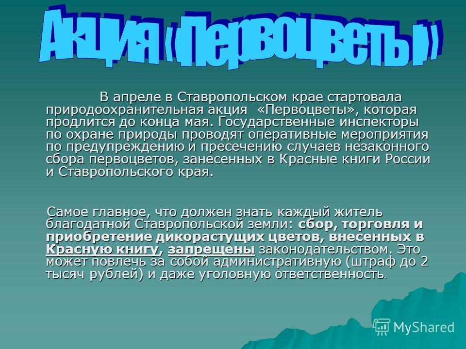 В апреле в Ставропольском крае стартовала природоохранительная акция «Первоцветы», которая продлится до конца мая. Государственные инспекторы по охране природы проводят оперативные мероприятия по предупреждению и пресечению случаев незаконного сбора