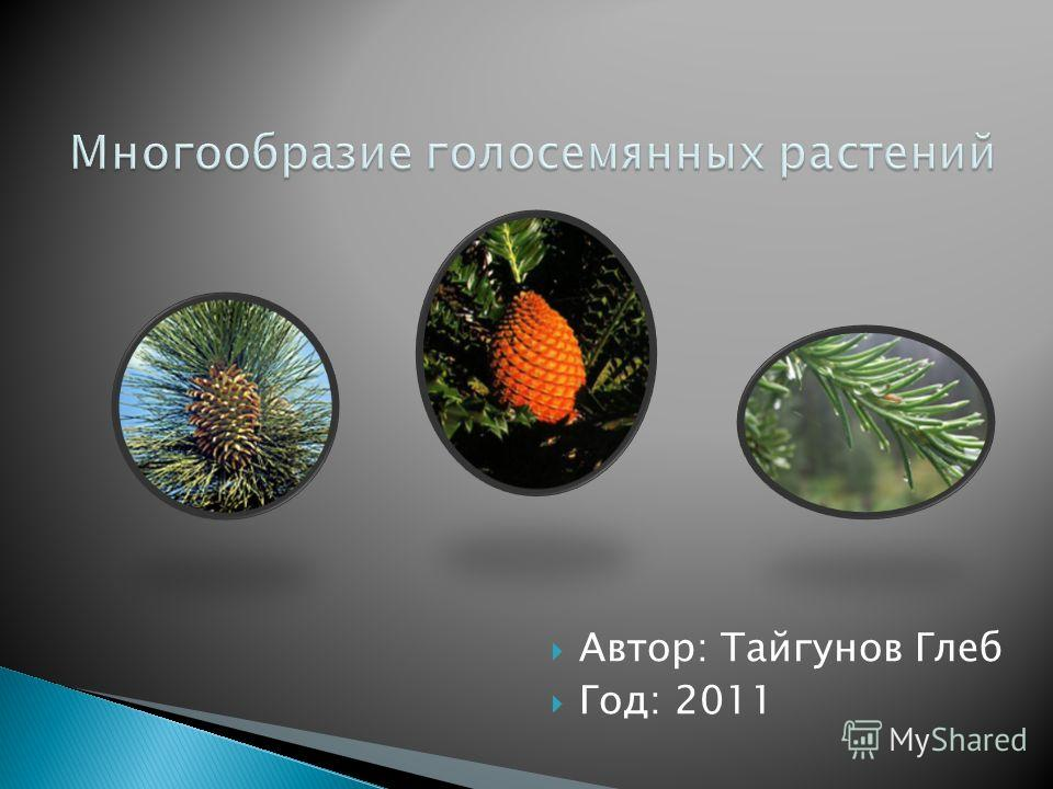 Автор: Тайгунов Глеб Год: 2011