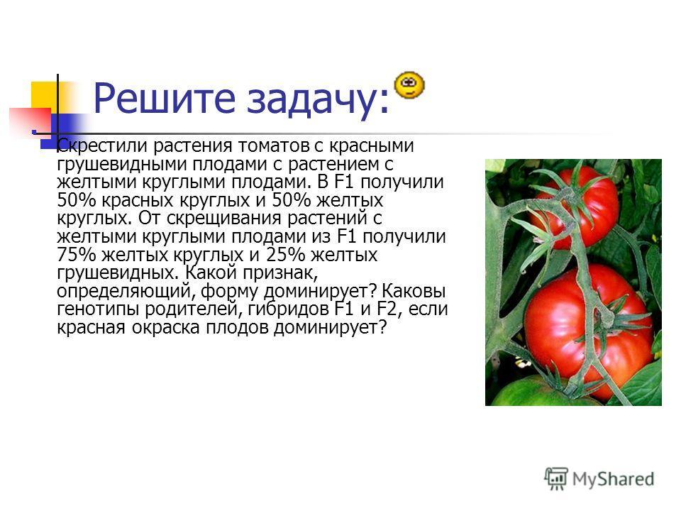 Решите задачу: Скрестили растения томатов с красными грушевидными плодами с растением с желтыми круглыми плодами. В F1 получили 50% красных круглых и 50% желтых круглых. От скрещивания растений с желтыми круглыми плодами из F1 получили 75% желтых кру