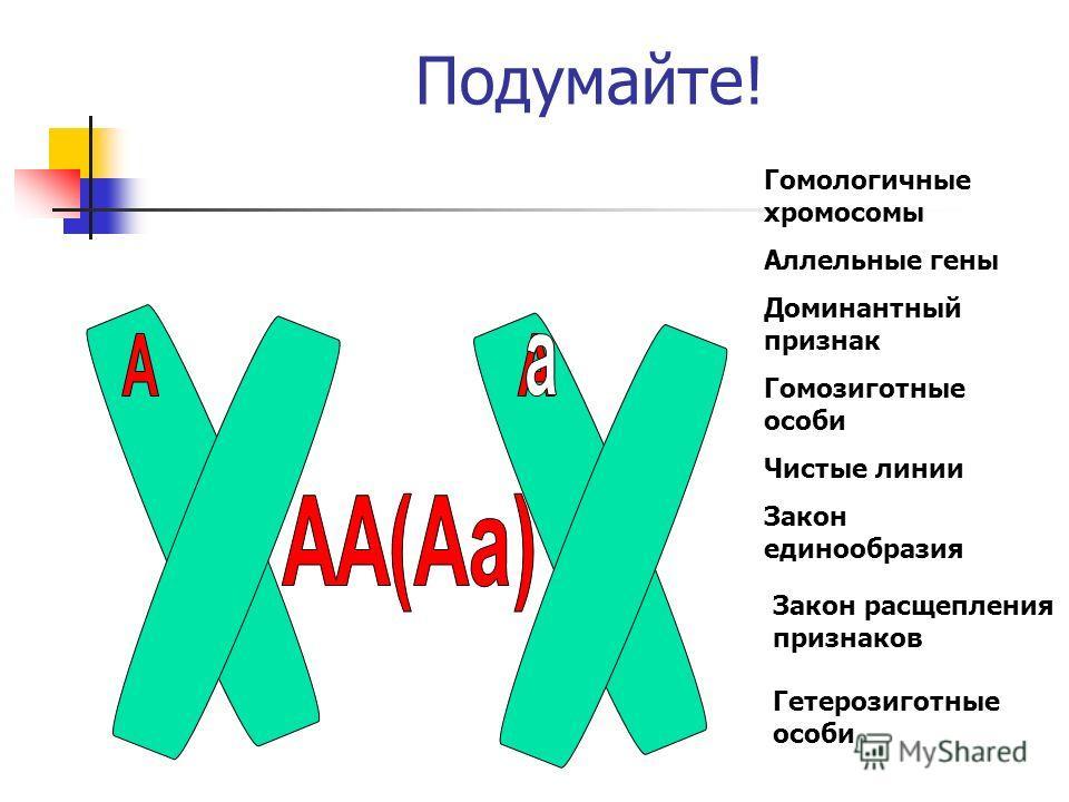 Подумайте! Гомологичные хромосомы Аллельные гены Доминантный признак Гомозиготные особи Чистые линии Закон единообразия Закон расщепления признаков Гетерозиготные особи