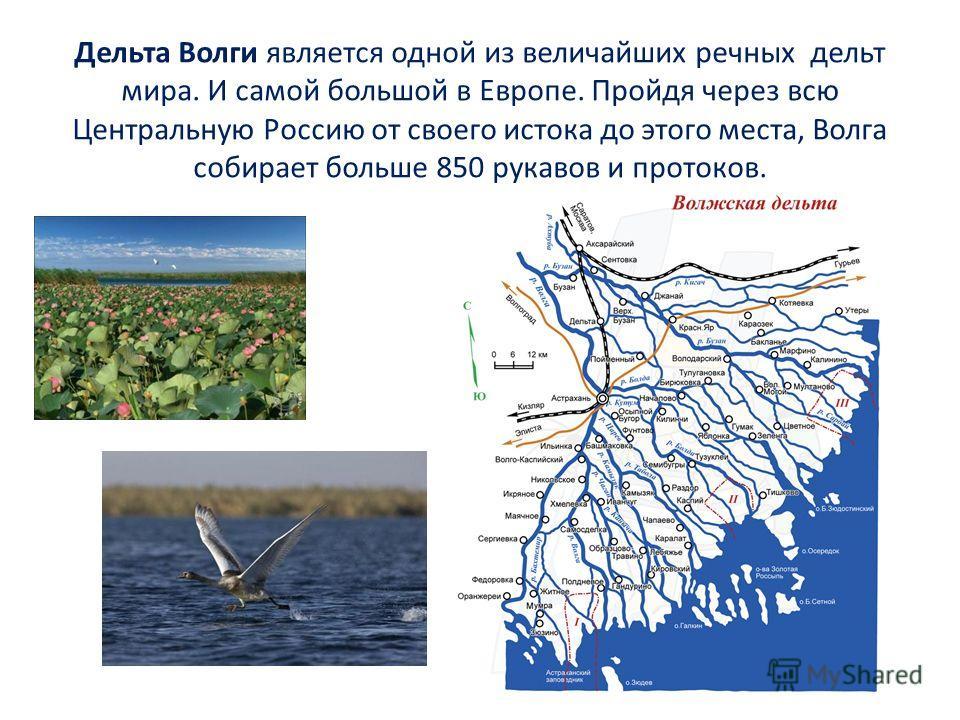 Дельта Волги является одной из величайших речных дельт мира. И самой большой в Европе. Пройдя через всю Центральную Россию от своего истока до этого места, Волга собирает больше 850 рукавов и протоков.