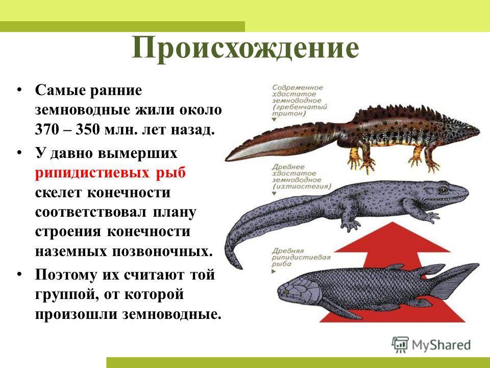 земноводные жили около 370