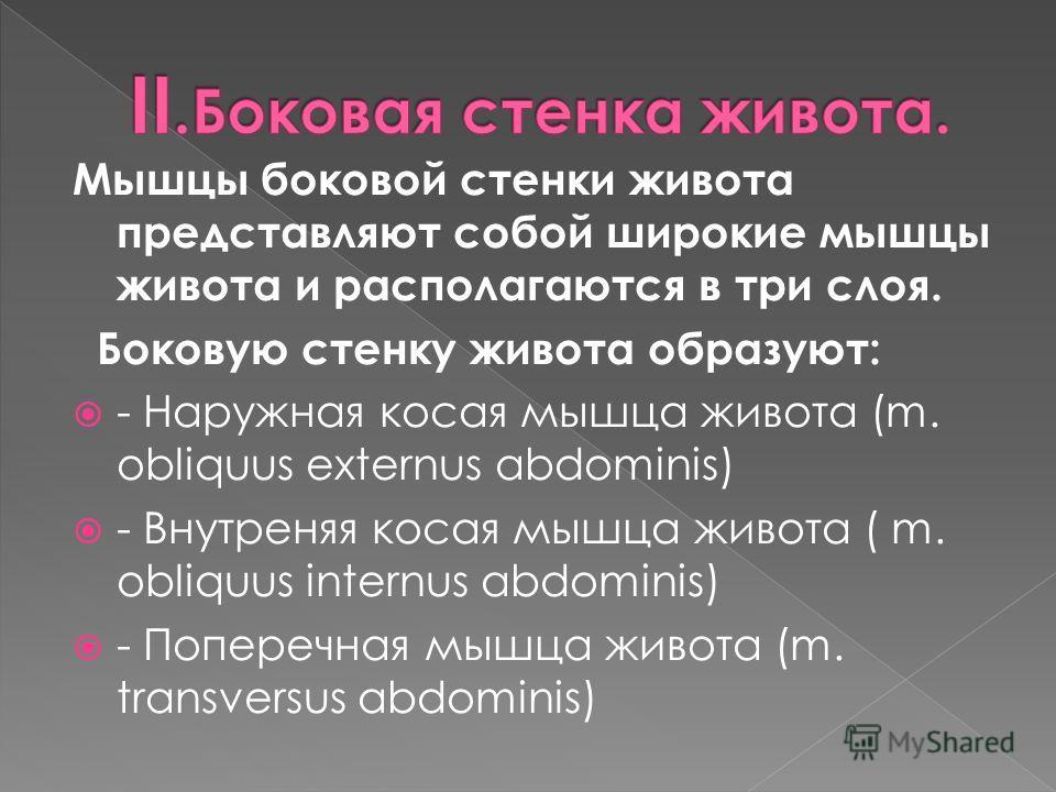 Мышцы боковой стенки живота представляют собой широкие мышцы живота и располагаются в три слоя. Боковую стенку живота образуют: - Наружная косая мышца живота (m. obliquus externus abdominis) - Внутреняя косая мышца живота ( m. obliquus internus abdom