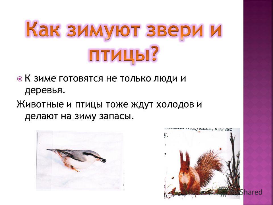 К зиме готовятся не только люди и деревья. Животные и птицы тоже ждут холодов и делают на зиму запасы.