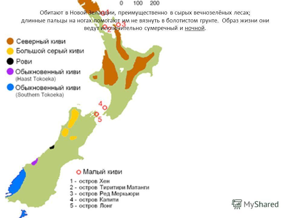 Обитают в Новой Зеландии, преимущественно в сырых вечнозелёных лесах; длинные пальцы на ногах помогают им не вязнуть в болотистом грунте. Образ жизни они ведут исключительно сумеречный и ночной.