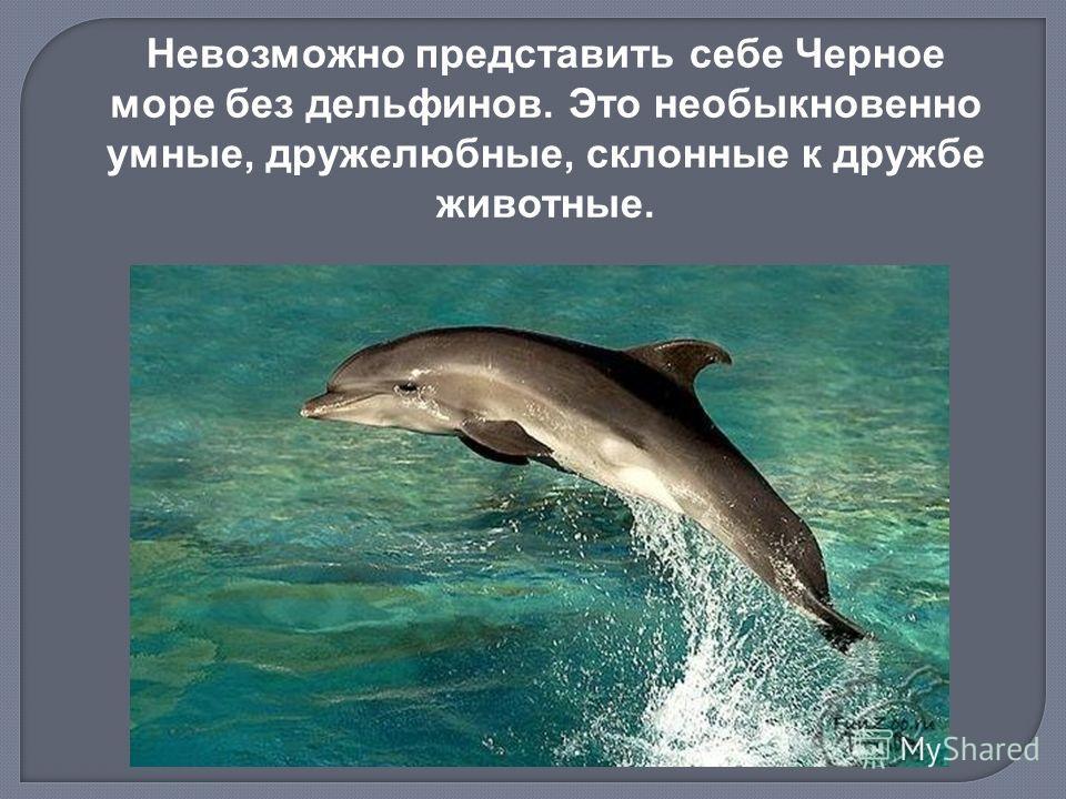 Невозможно представить себе Черное море без дельфинов. Это необыкновенно умные, дружелюбные, склонные к дружбе животные.