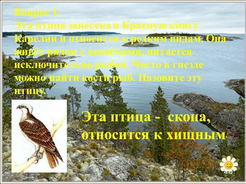 Вопрос 1. Эта птица занесена в Красную книгу Карелии и относится к редким видам. Она живёт рядом с водоёмами, питается исключительно рыбой. Часто в гнезде можно найти кости рыб. Назовите эту птицу. Эта птица - скопа, относится к хищным