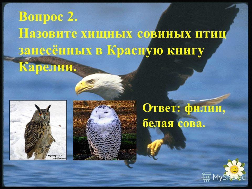 Вопрос 2. Назовите хищных совиных птиц занесённых в Красную книгу Карелии. Ответ: филин, белая сова.