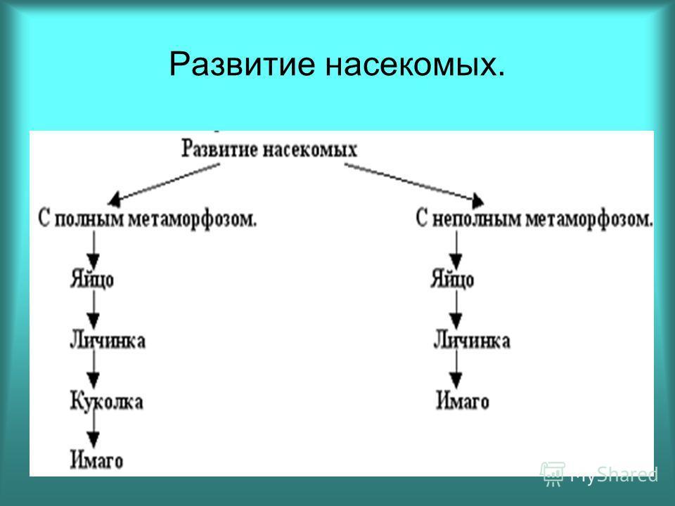 Презентация Развитие Насекомых