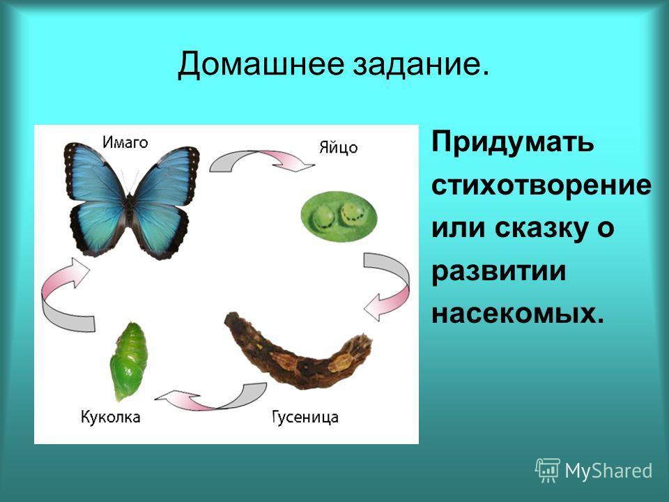 Домашнее задание. Придумать стихотворение или сказку о развитии насекомых.