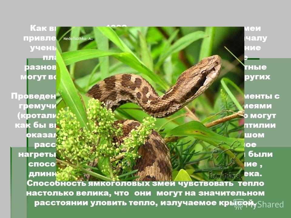 Ямкоголовые или тепловидящие змеи Как выяснили в 1892 году ученые, гремучих змеи привлекает пламя зажженных спичек. Но поначалу ученые думали, что змеи реагируют на мерцание пламени. Теперь мы знаем, что отдельные разновидности змей и некоторые други