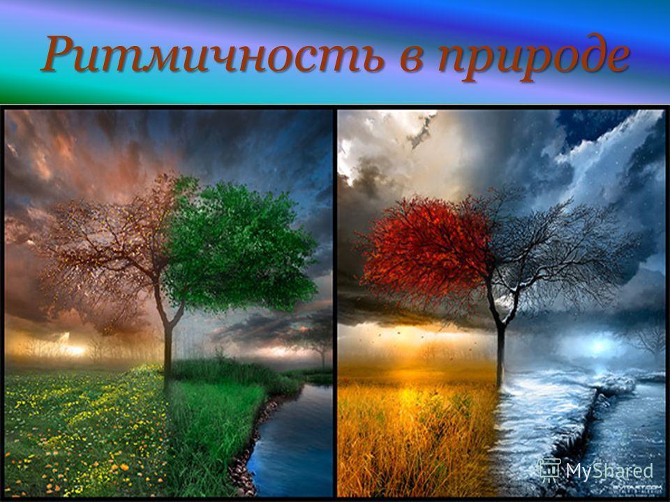 МОУ Новопоселеновская СОШ Курского района Курской области Ритмичность в природе
