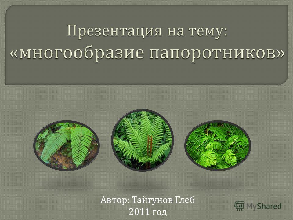 Автор : Тайгунов Глеб 2011 год